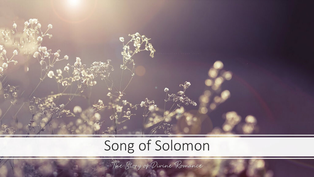 DD Song of Solomon